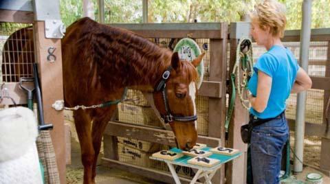 باهوش ترین اسب در دنیا (+عکس)
