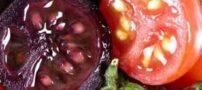 خواص گوجه فرنگی بنفش