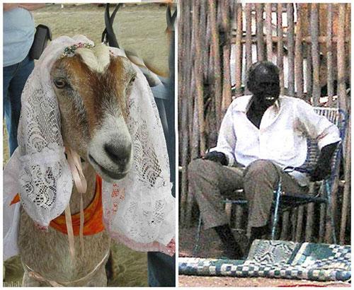 مردی که مجبور به ازدواج با بز شد (+عکس)