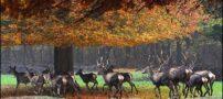 تصاویر زیباترین پارک ملی از سراسر دنیا