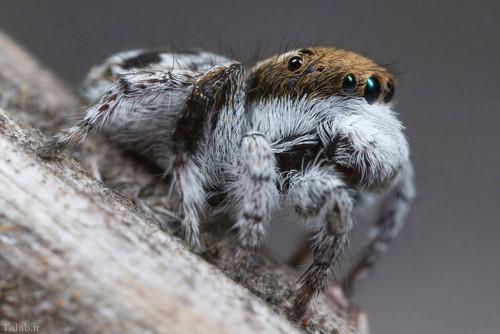 ورود عنکبوت وحشتناک به گوش زن آمریکایی (+عکس)