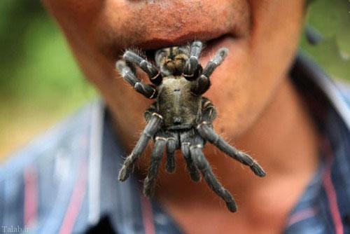 عنکبوت خوردن برای صبحانه