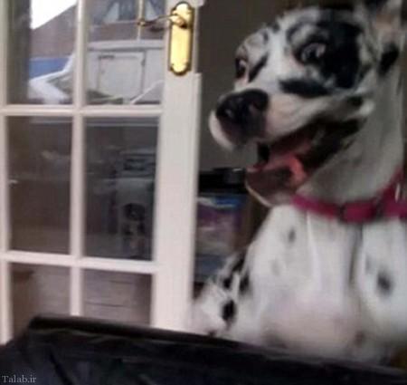 سگ پر طرفدار با 2 میلیون فالوور در اینستاگرام (+ عکس)