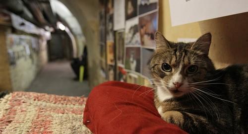 رئیس جمهور گربه های جهان در روسیه (+ عکس)