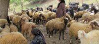 تصاویری بسیار زیبا  از روستای «اوچ آغاج»