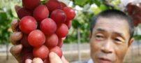 گران ترین خوشه انگور دنیا 27 میلیون (+عکس)