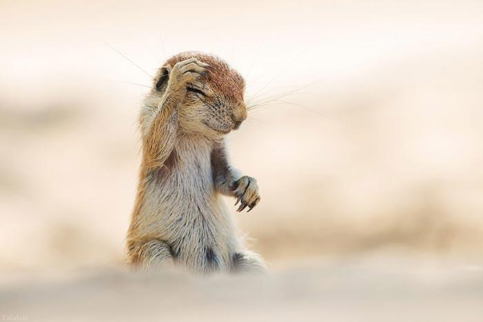 لحظه های جالب و دوست داشتنی از حیوانات (+عکس)