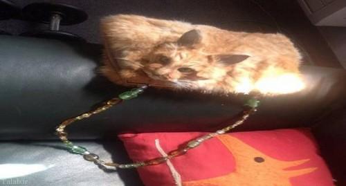 کیفی عجیب با پوست گربه مرده (+عکس)