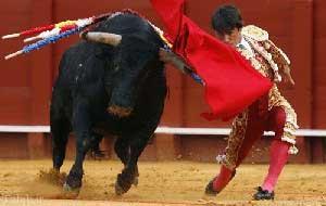 حساسیت گاو ها نسبت به رنگ قرمز