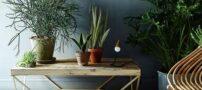این 7 گیاه در آپارتمان فضایی پر انرژی می سازد