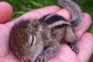 زیباترین سنجاب دنیا (+عکس)