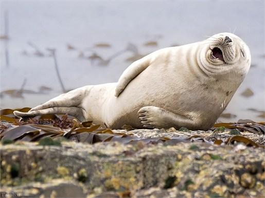 خنده جالب حیوانات دیدنی است (+عکس)