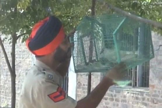 دستگیری کبوتر جاسوس پاکستان (+عکس)