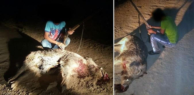 افرادی جهت کشتن حیوانات دستمزد می گیرند !! (+عکس)