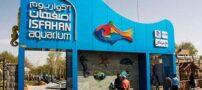 معرفی تونل آکواریوم اصفهان (+ تصاویر)