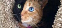 تصاویری از گربه های ملوس و بامزه دنیا (+عکس)