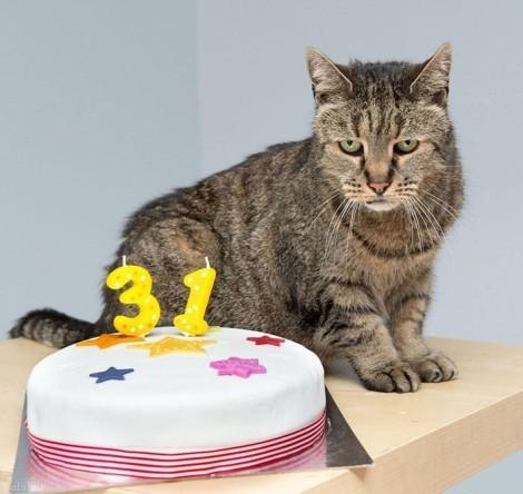 رکورد پیرترین گربه با سن 31 سالگی (+عکس)