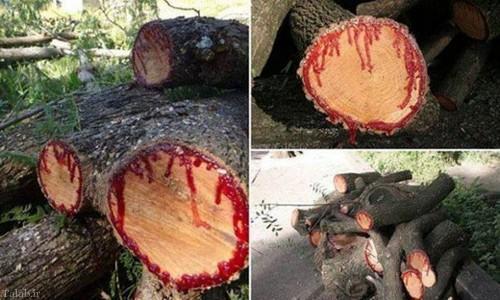 درختی که به جایی آب خون در رگ هایش است (+عکس)