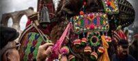 تصاویر جالب از فستیوال کشتی شترها