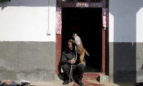 پر درآمدترین میمون های دنیا را ببینید