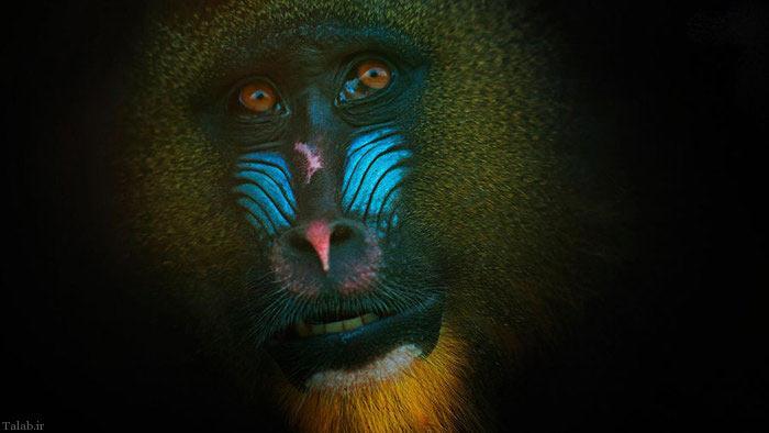 آثار زیبا و جالب از خالق دنیا (+عکس)
