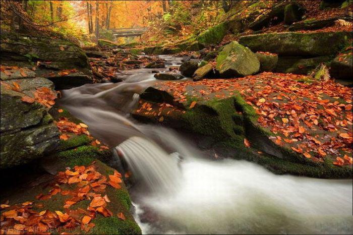 تصاویری زیبا و رنگارنگ از پاییز