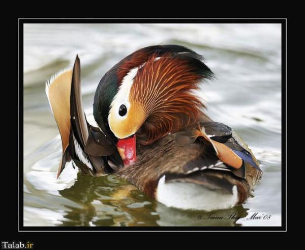 عکس های زیبا از پرندگان مهاجر