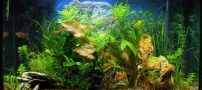 آشنایی با گیاهان اكواریومی