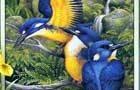 عکس های زیبا از پرندگان نقاشی شده