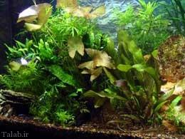 آشنایی با انواع بیماری های ماهی های آکواریومی