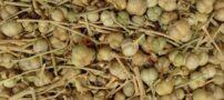 این گیاه در افراد گرم مزاج باعث سردرد و حالت تهوع میشود