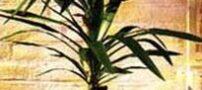 نکاتی برای نگهداری از گل و گیاه در منزل