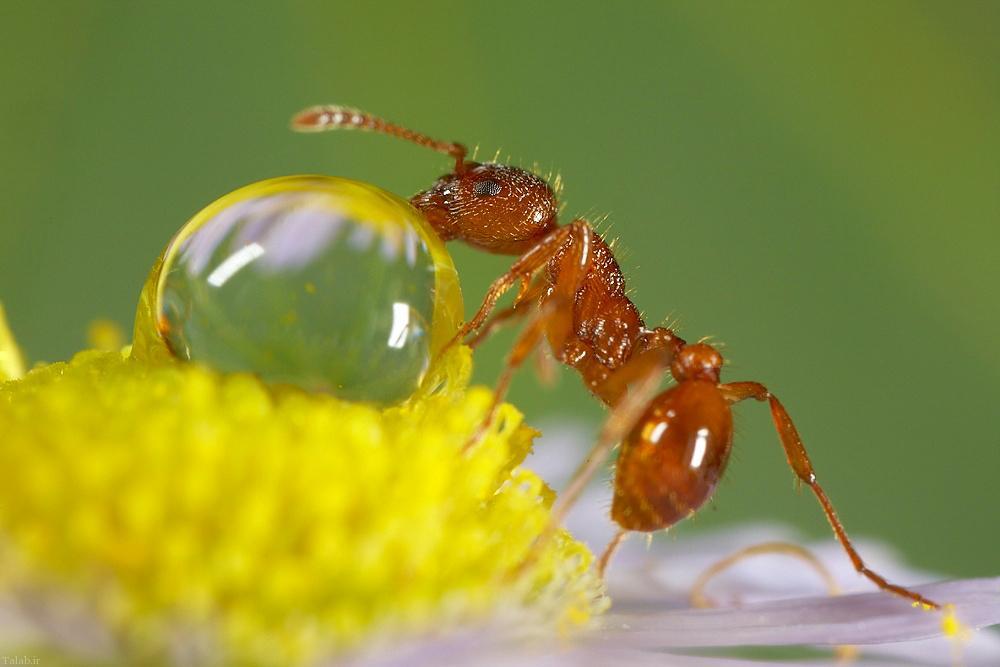 مورچه را از خود دور کنید