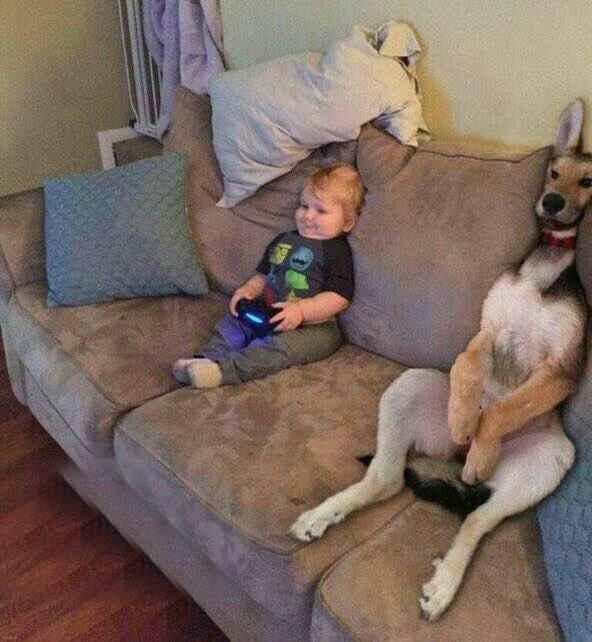 سوژه های طنز جدید و خنده دار !+ عکس