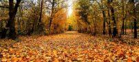 پاییز و خداحافظی باشکوه و دیدنی اش + تصاویر