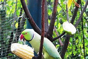 نادرترین گونه های پرندگان در باغ پرندگان ساوجبلاغ