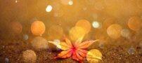 عکس های عاشقانه و رویایی از مناظر پاییزی