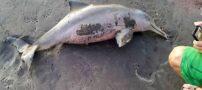 عکس گرفتن از بچه دلفین باعث مرگ او شد + عکس