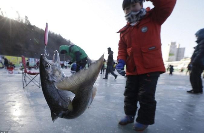 فستیوال گرفتن ماهی با دندان در کره جنوبی + عکس