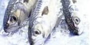 آیا میدانید روغن ماهی اعصاب آسیب دیده را ترمیم می کند؟