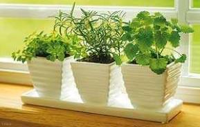 گیاهان نامناسب در فضای خانه