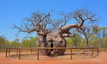 زندانهایی در تنه درختان طویل ! (عکس)