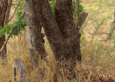 تصاویر بسیار جالب از حیوانات در حال استتار + عکس