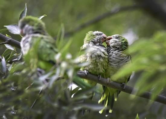 تصاویری جالب و خنده دار از زندگی حیوانات
