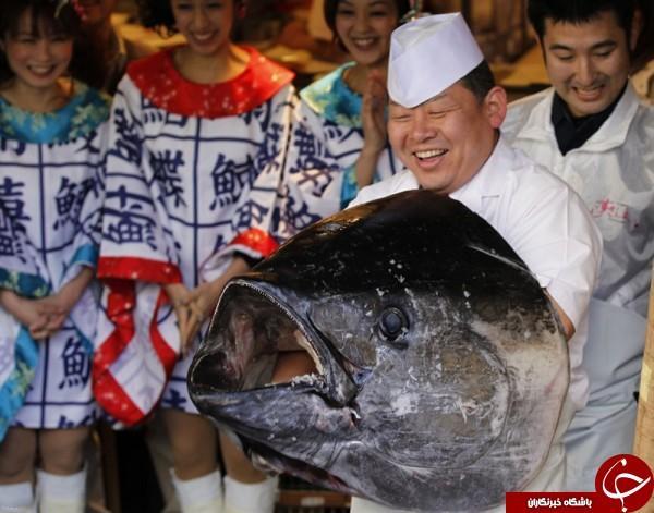 با گران ترین ماهی تن جهان آشنا شوید + عکس