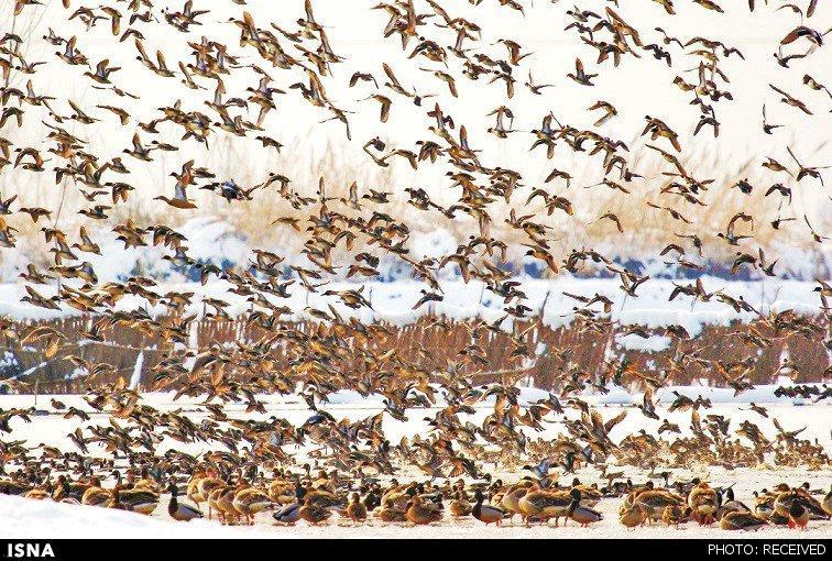 شکار صدها هزار پرنده مهاجر در ایران