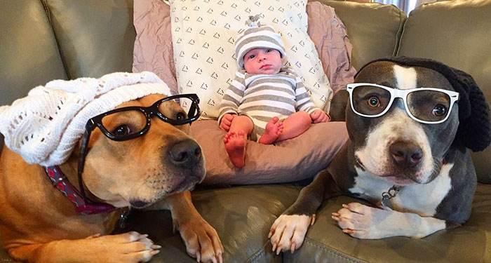حیواناتی که با به دنیا آمدن این نوزاد به او علاقه مند شدند + عکس