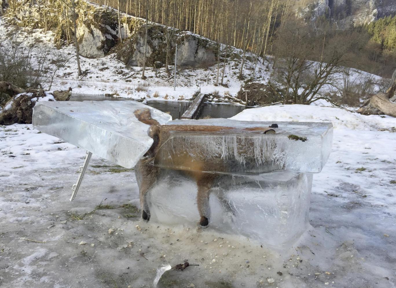 عکس عجیب یخ زدن روباه در حال حرکت در آلمان