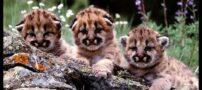 تصاویر های تماشایی از حیوانات بامزه و جالب