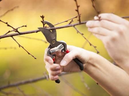 اصول مهم و کاربردی هرس کردن درختان در آخر سال